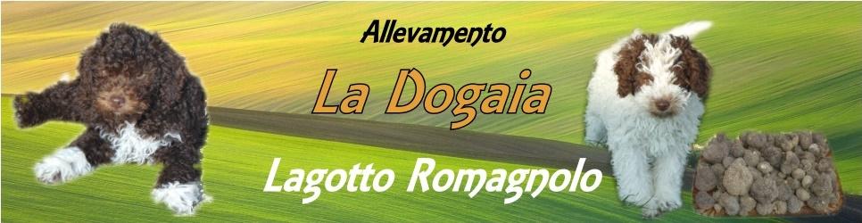 Allevamento Amatoriale Lagotto Romagnolo - La Dogaia